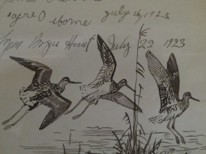 Figure 3: Guest book sketch of Greater Yellowlegs, by Lynn Brogue Hunt, 1910.