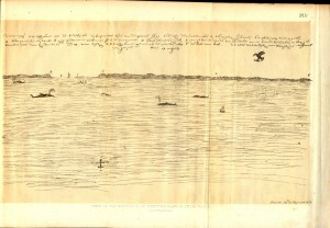 6. Figure 7. Drawing depicting North Atlantic Right Whales off New York Harbor by Jaspar Dankers (1679-80)