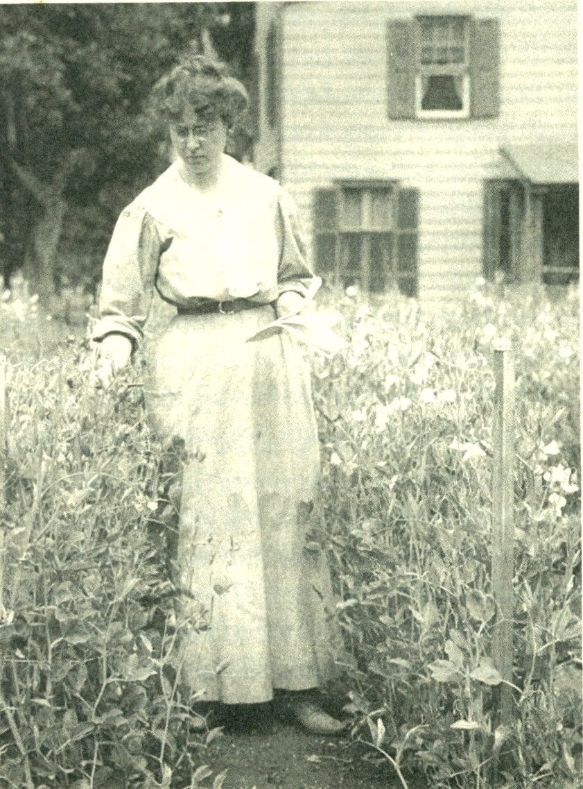 "Fig. 1. ""Taking notes."" Edith Loring Fullerton among the sweet peas in Huntington, c. 1906. Photograph by Hal B. Fullerton. Courtesy Nauman Collection."